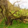Baum (c) Lache-Liebe-Lebe